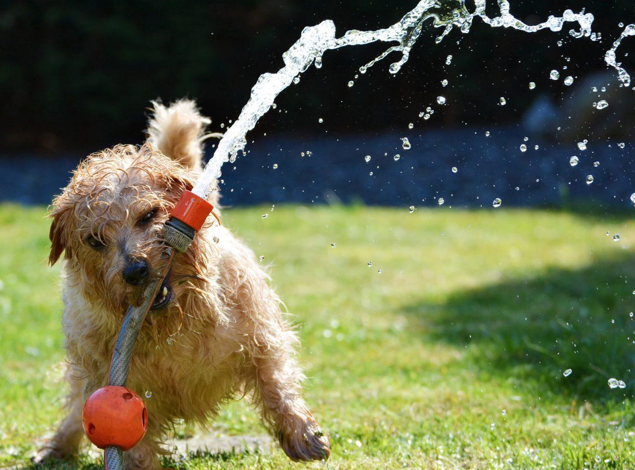 Enhance Water Uptake